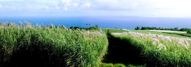 Rum Journal: Rhum Clement's Canne Bleue Rhum Blanc Agricole